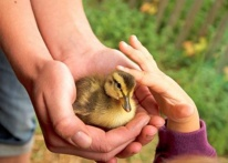 FESTA DI COMPLEANNO CON GLI ANIMALI – ANIMAZIONE PER BAMBINI A TORINO